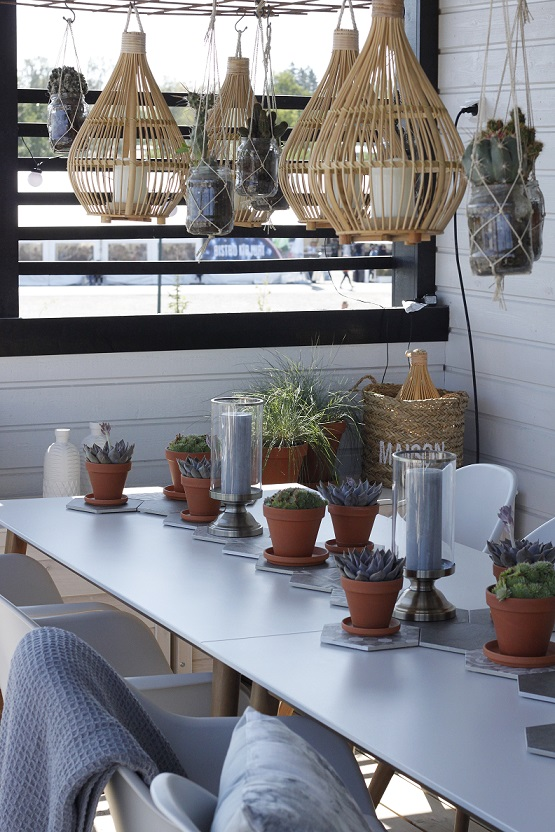 mehikasvit ja kaktukset terassilla